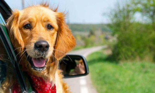 Sugerencias para viajar con tu mascota este verano