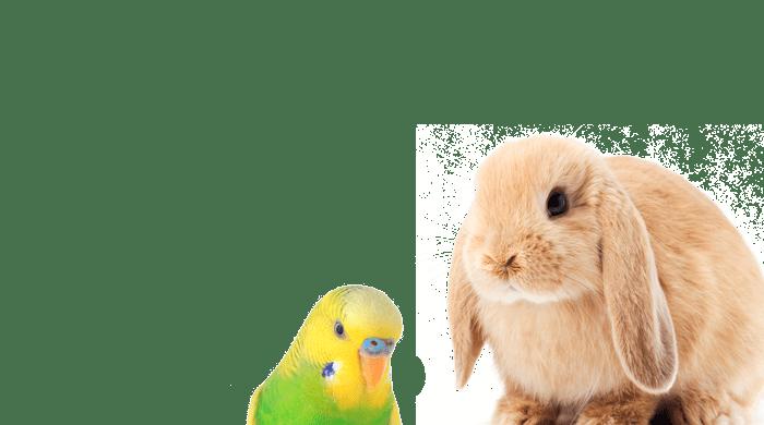 Pájaros y roedores