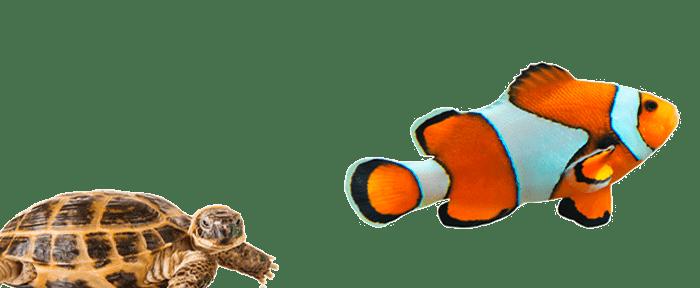 Peces y reptiles